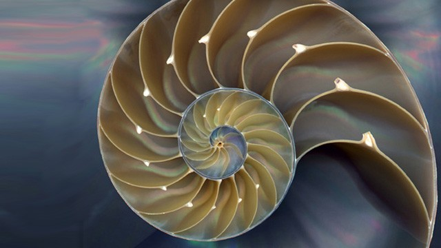 nautilus-copy_web